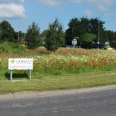 Langley Interiors sponsored roundabout with beautiful 'Wild' flowers.